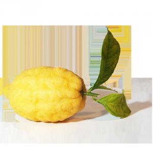 limoni della costa d'amalfi igp Solarelli