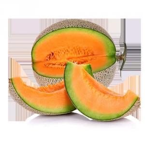 Meloni retati Solarelli