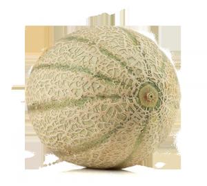meloni retati con fetta Solarelli