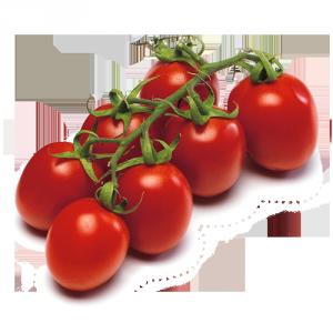 pomodoro plum piccadilly Solarelli