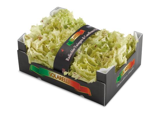 Radicchio variegato di Castelfranco Solarelli