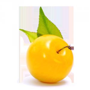 susina gialla Solarelli